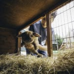 How to Make a Homemade Rabbit Hutch