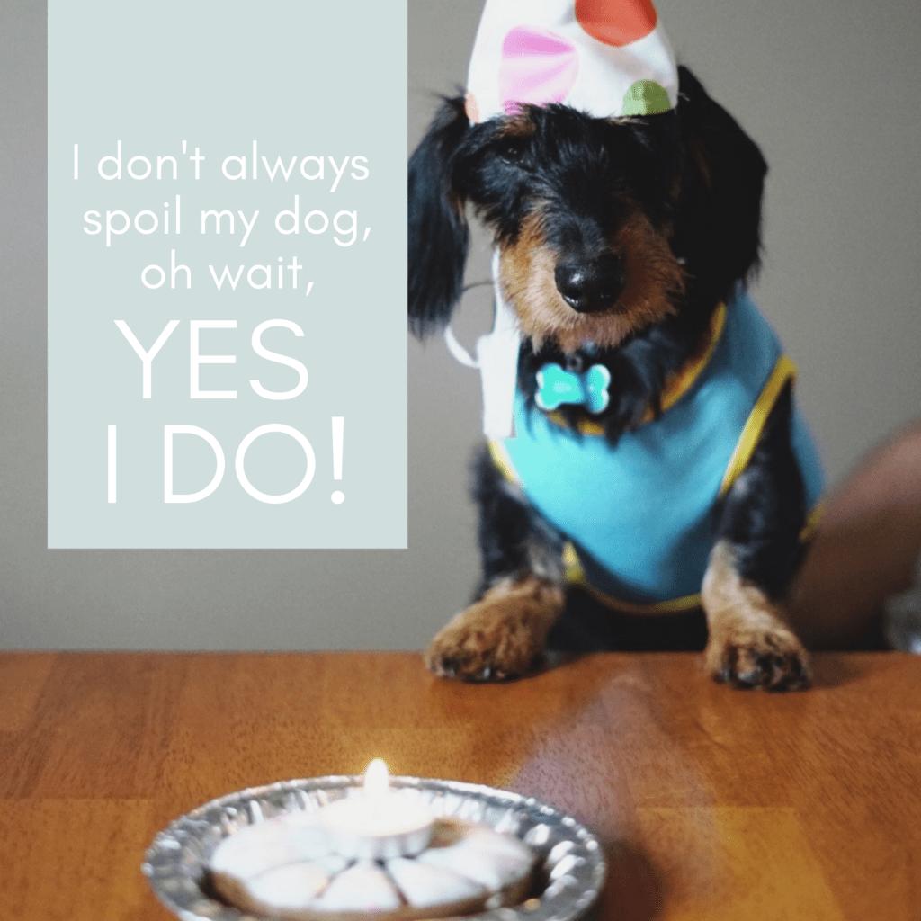 I don't always spoil my dog, oh wait, YES I DO!