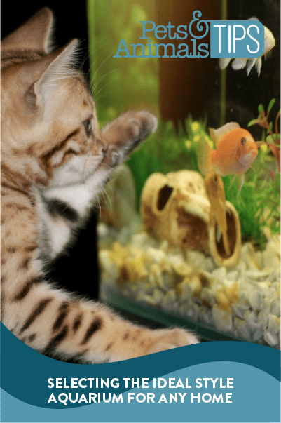 Selecting the Ideal Style Aquarium for Any Home