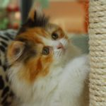 Do Scratching Posts Really Work for Cats?