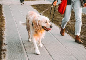 Taking a dog on a walk with a leash