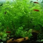 5 Tips for Cleaning and Maintaining a Home Aquarium