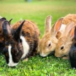 Are Rabbits Easy to Care For?