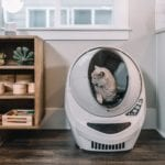 Do Cats Like Enclosed Litter Boxes?