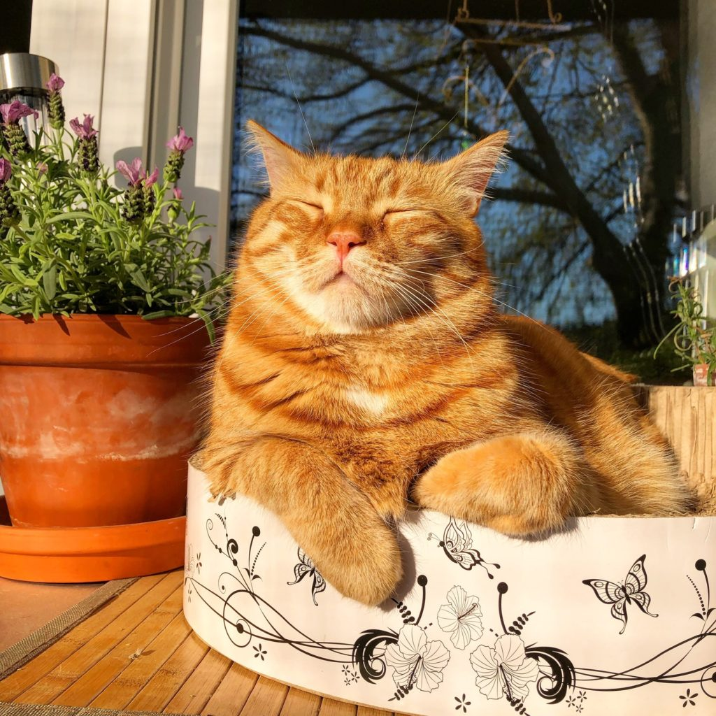 Ginger Cats are Rare