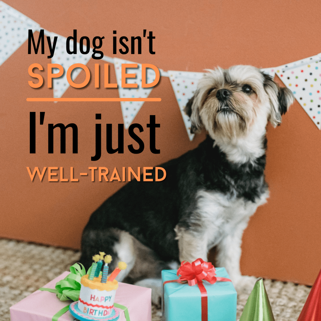 My dog isn't spoiled, I'm just well trained
