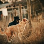 Types of Fences for Dogs