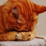 How to Get Rid of Cat Fleas Naturally